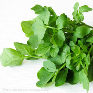 benefits_of_eating_watercress_fruits-vegetables-benefits.blogspot.com(9)