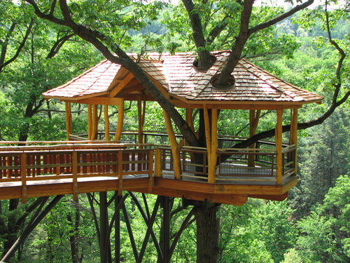 Beauty of Tree Houses