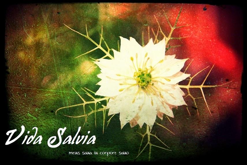 Vida Salvia