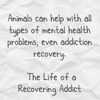 Quote Animals and Addiction