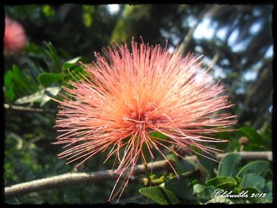 Fotos De Jardim Com Flores - flores do Jardim de Santa Barbara, Braga, Portugal – Foto