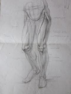 анатомический рисунок: