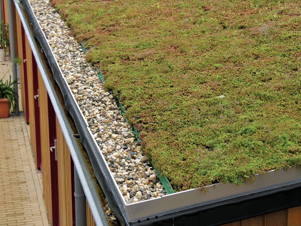 groene daken een groendak aanleggen is niet moeilijk. Black Bedroom Furniture Sets. Home Design Ideas