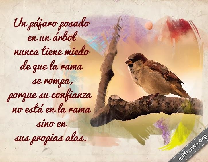 frases de confianza y motivación, Un pájaro posado en un árbol nunca tiene miedo de que la rama se rompa