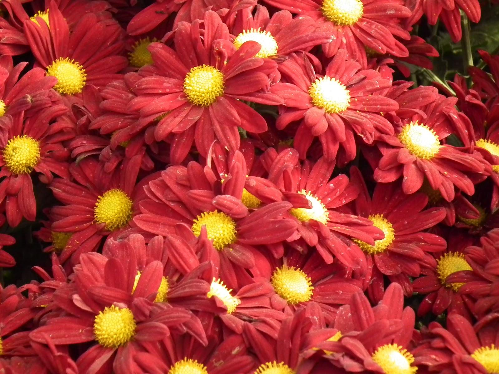 Landscapexperts Flower Of The Week November 2012