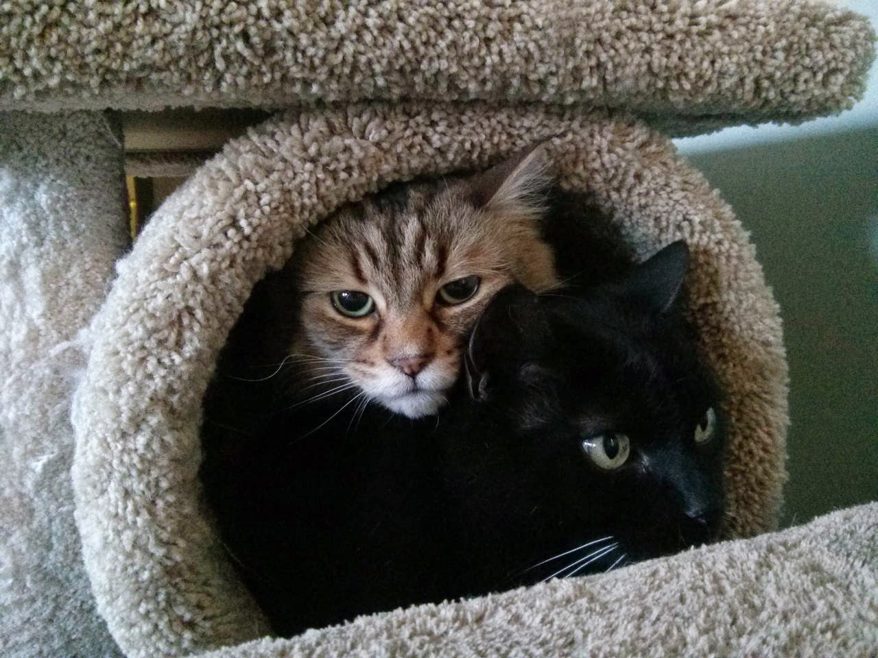 Funny cats - part 99 (40 pics + 10 gifs), cat pictures, cats inside cat tree
