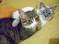 Foto dei miei due gatti: Peppino e Freddie