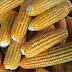 Ligao City bags national award for agriculture, leads Albay for producing toxin-free corn