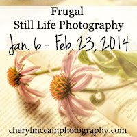 FREE Still Life Photography Course