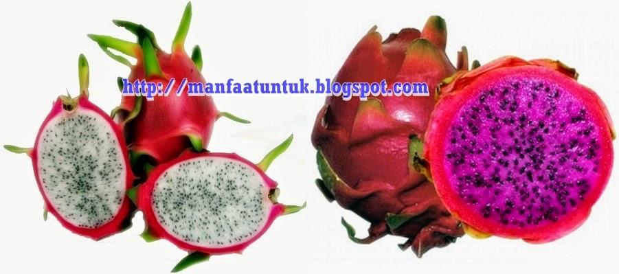 manfaat buah naga merah dan putih untuk kesehatan