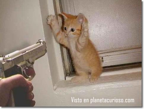 imagenes chistosas de gatos con armas - MastikSoul Vs Cidinho & Doca Rap Das Armas YouTube