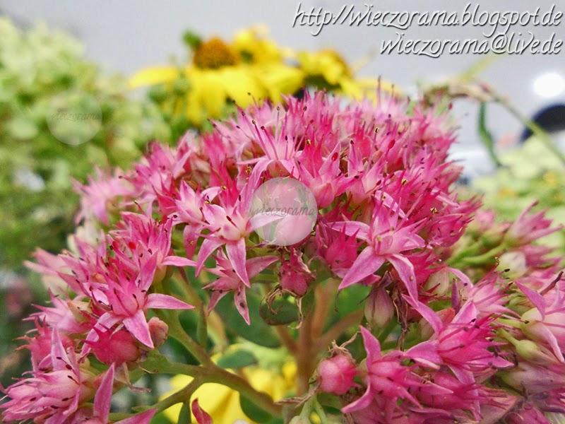 Das Foto zeigt eine Nahaufname von pinkfarbenen kleinen Blueten aus einem Blumenstrauss mit Sommerblumen die im Garten wuchsen