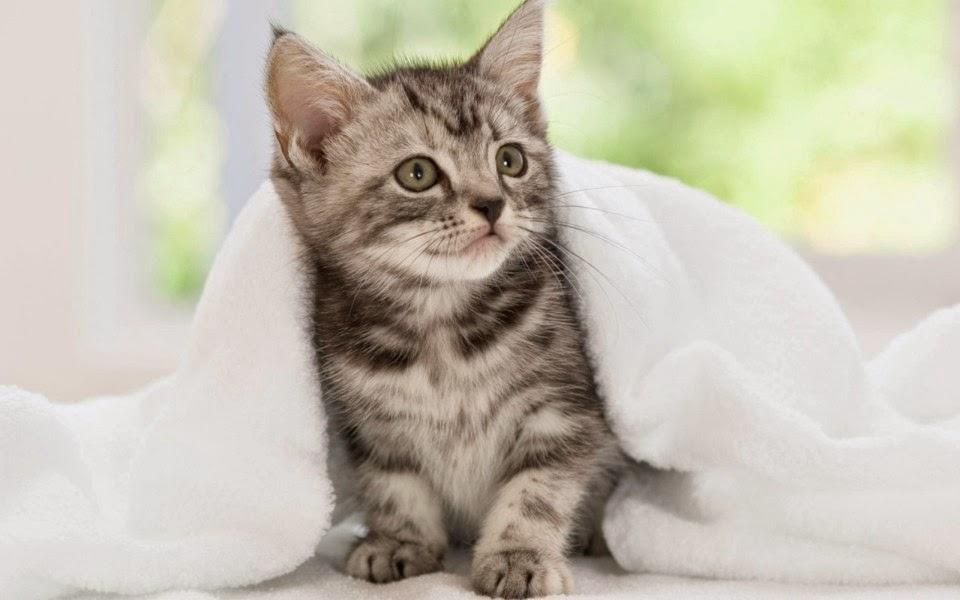 ảnh chú mèo con đáng yêu