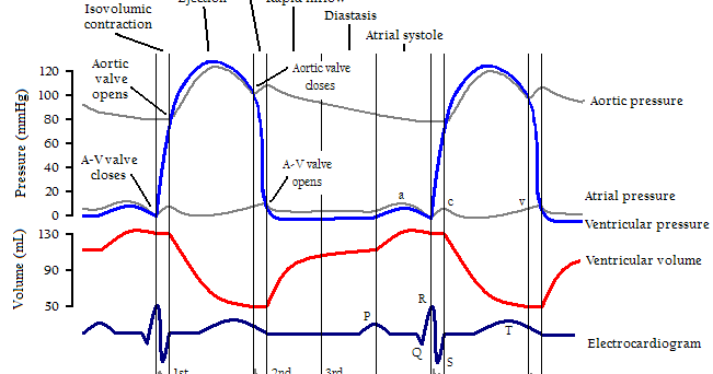 Mediconotebook paq1c2v3 sequential cardiac cycle events ccuart Gallery