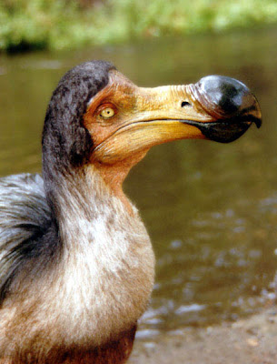 dodo-figure-by-bill-munns pic