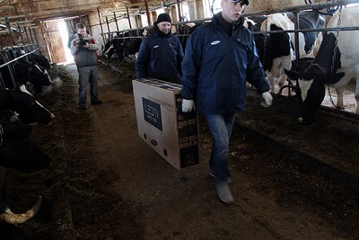 ... kandang sapi paling elit di dunia yang dilengkapi dengan layar LCD TV