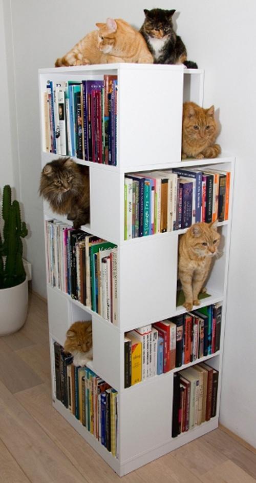 Jugamos con los gatos - Estanterias para gatos ...