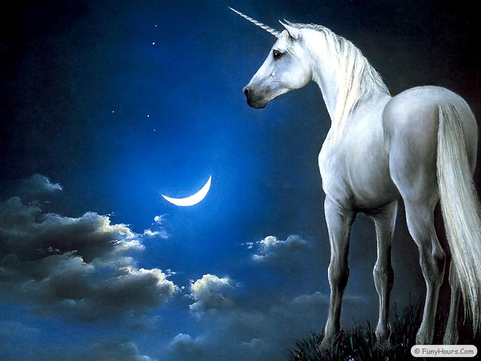 unicorn pegasus wallpapers your title. Black Bedroom Furniture Sets. Home Design Ideas