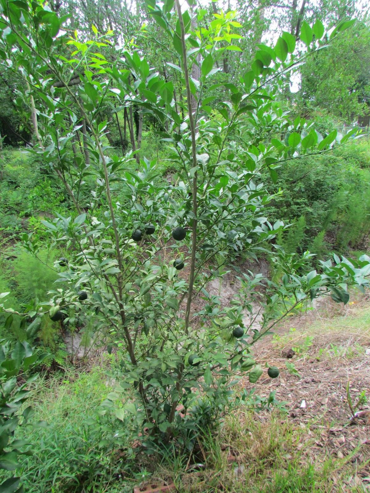tim u0027s backyard september 2012