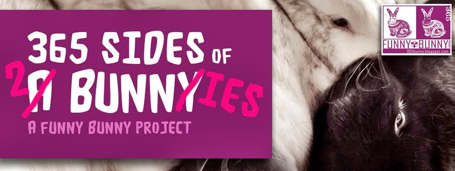 365 Sides of 3 Bunnies: A Funny Bunny Project
