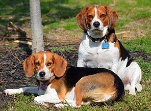 Molly & Jackson