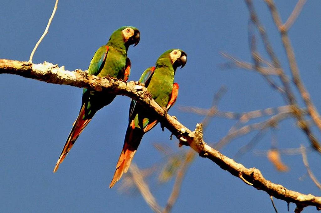 Cute Birds On Tree A2z Wallpaper