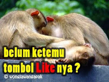 ... AAAAAAAAFZc/Wo-ulzkmTZI/s1600/dp+bbm+gambar+tombol+like+lucu+gokil.jpg