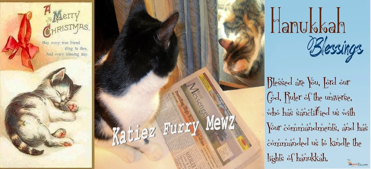 **Katiez Furry Mewz (Newest Blog!)**
