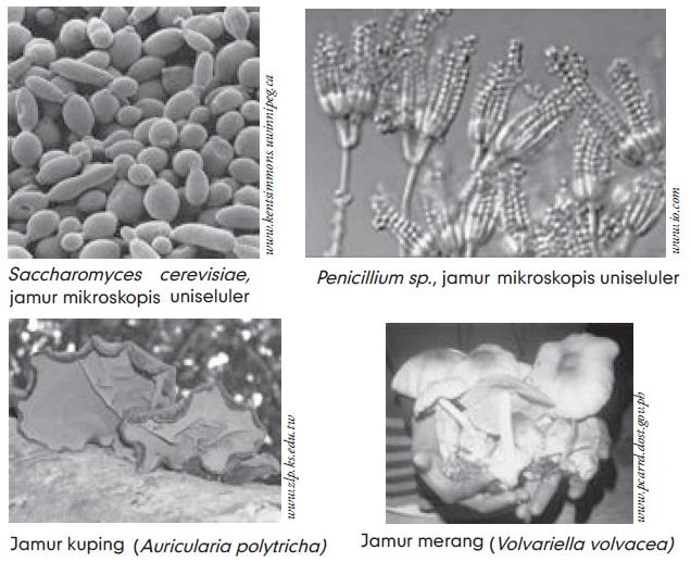 Struktur Tubuh Jamur /  Bagian Tubuh Jamur