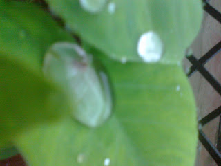 Seems like a single dew is sitting on leaf waiting to be caught by cam :)