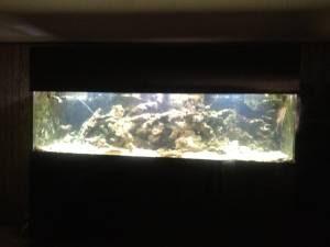 Giant aquariums 500 gallon aquarium 5500 north jersey for 150 gallon fish tank for sale craigslist