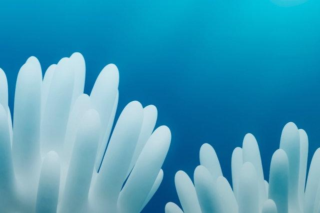 guantes en mar como anemonas