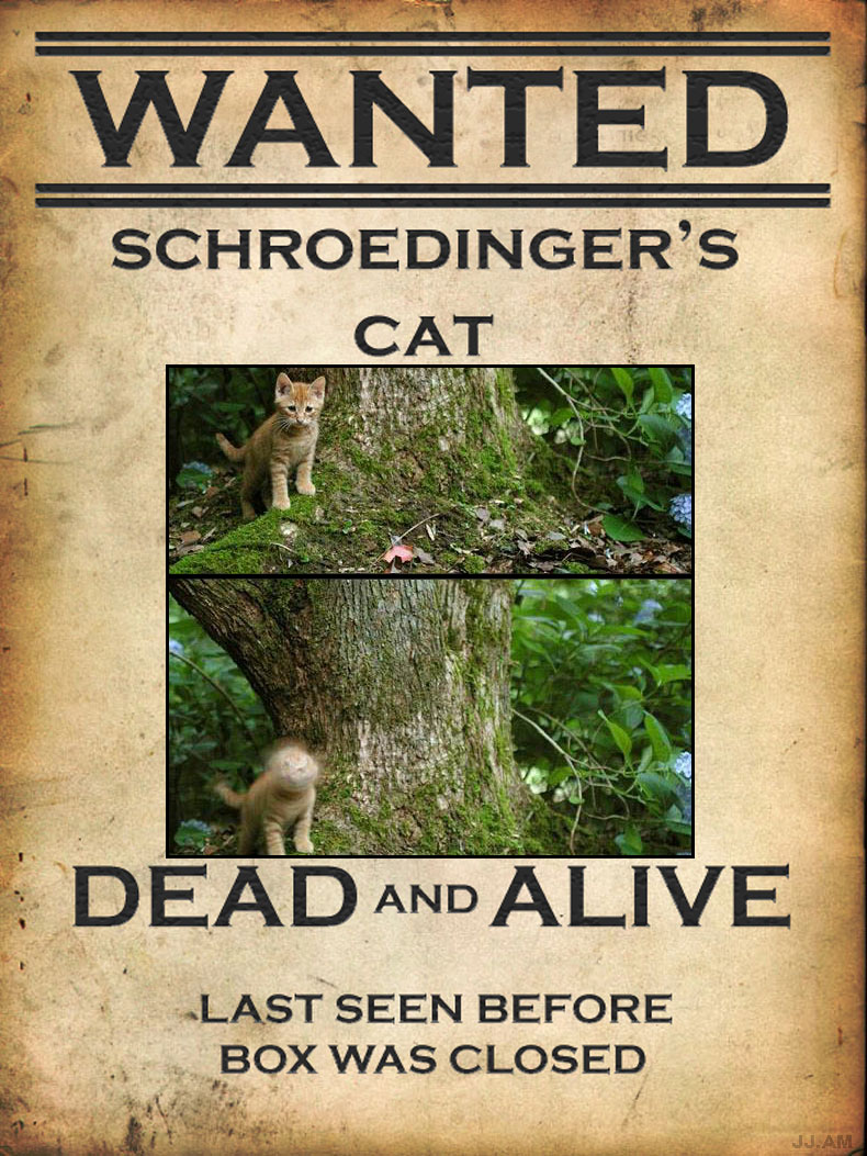 Schroedingers Cat Wanted | Funny Cat Pictures