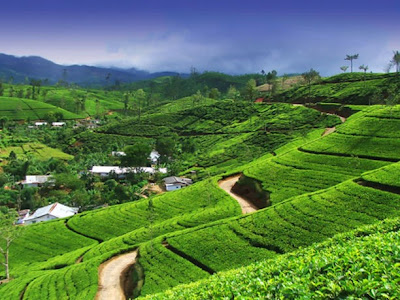 Best Honeymoon Destinations In India - Darjeeling
