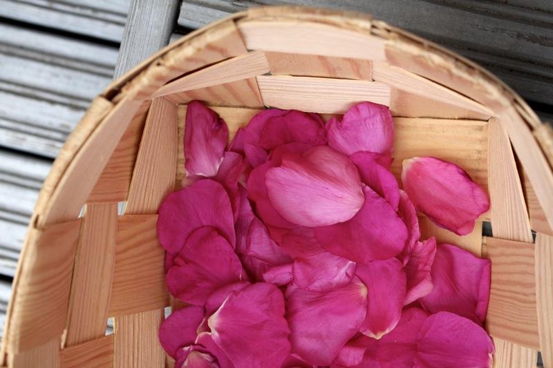 Pinkin ruusun lehdet