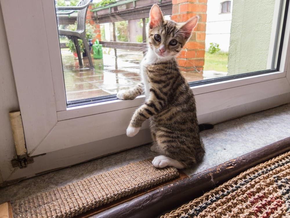 Funny cats - part 90 (40 pics + 10 gifs), cute kitten