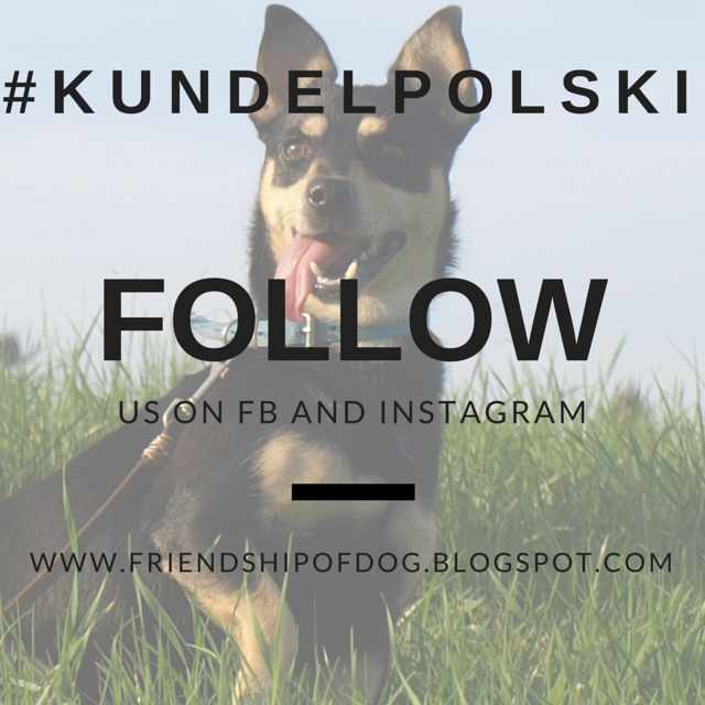 Kundel Polski