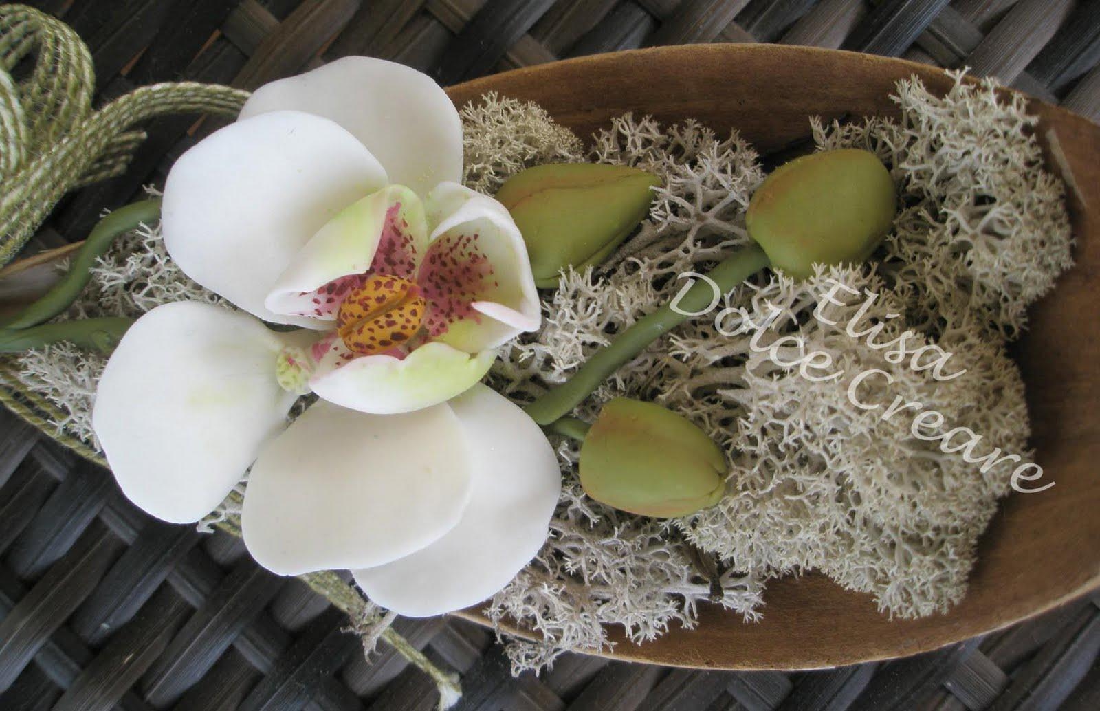orchidee e muschio