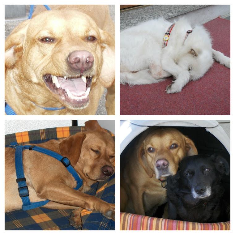 I nostri cani
