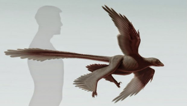 Makhluk Purba Changyuraptor yangi Ditemukan