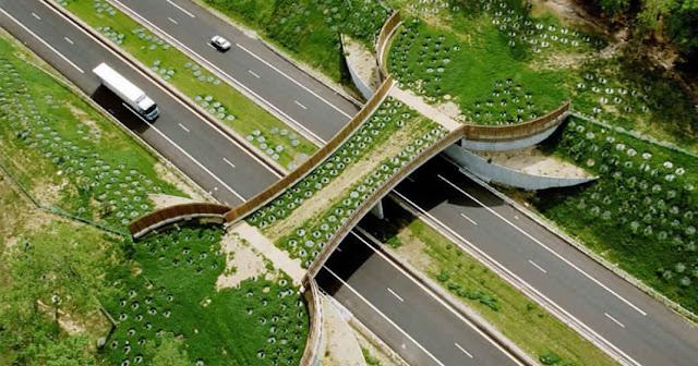 هاته الجسور المبتكرة ساهمت في إنقاذ حياة الآلاف من الحيوانات
