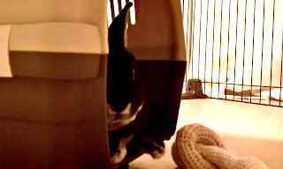 キャリーバッグで寝るうさぎ、ミニレッキス