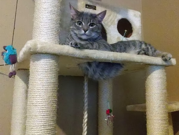 Funny cats - part 80 (40 pics + 10 gifs), cat plays in cat tree