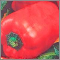 Сладкий перец сорт «Дар Каспия»