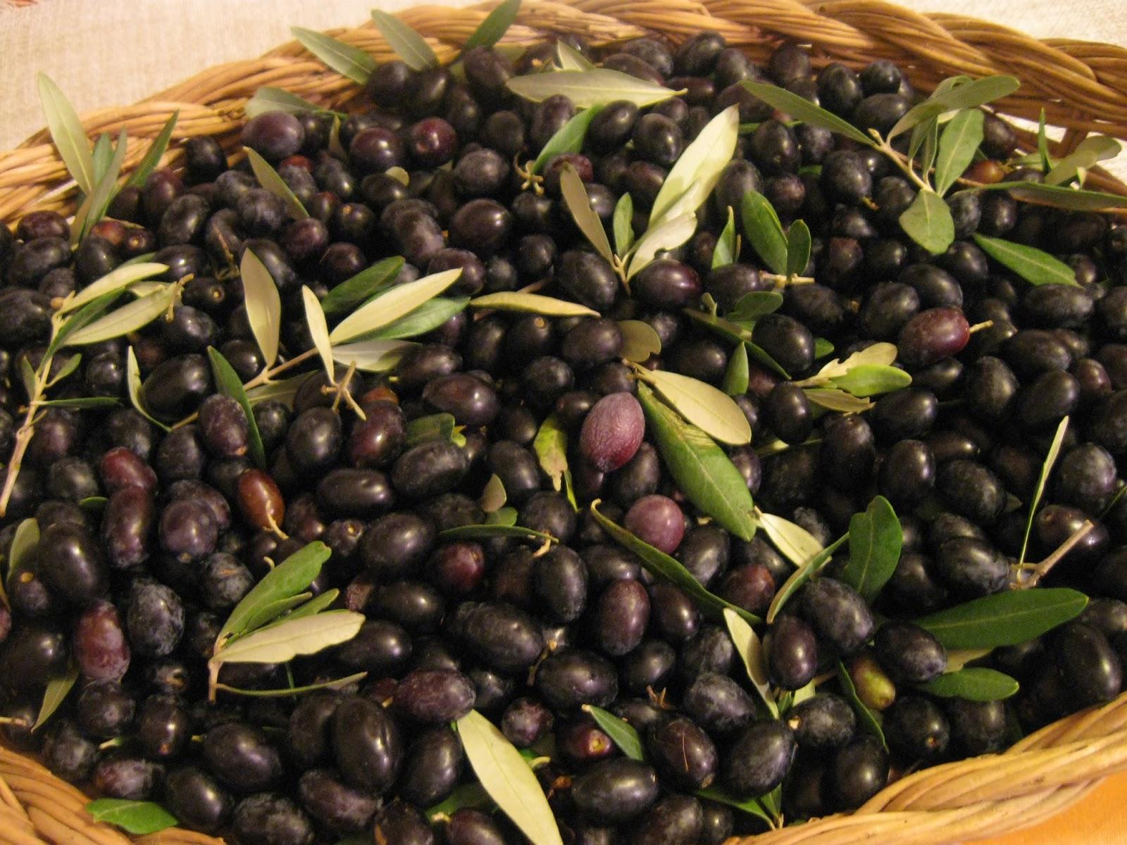 La granja di adriana olive nere in salamoia - Cucinare olive appena raccolte ...