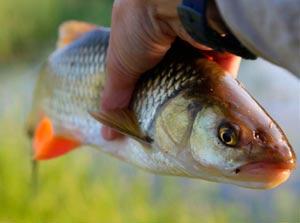 Ловля голавля в октябре на реке