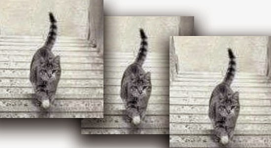 Where would the Cat go - Up or Down? #Catgate