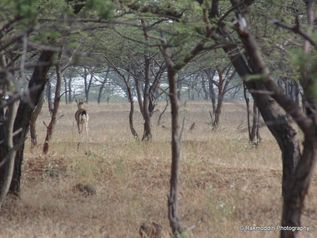Mayureshwar Wildlife Sanctuary near Pune