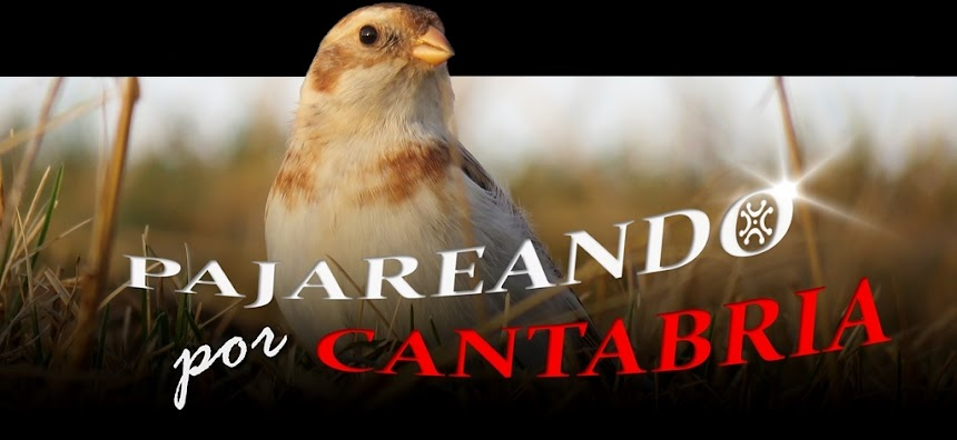 Pajareando por Cantabria