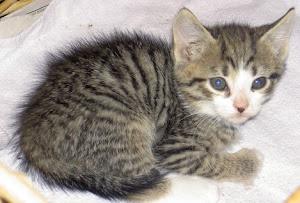 Katten Melvin